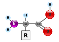 Learn more about Amino acid