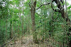 General knowledge about Tropical and subtropical moist broadleaf forests